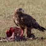 kenya_animals_birds_IMG_0327