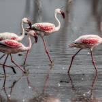 kenya_animals_birds_IMG_0373