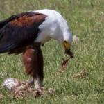 kenya_animals_birds_IMG_1274