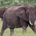 kenya_animals_elefants_IMG_0008