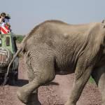 kenya_animals_elefants_IMG_1111