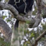 kenya_animals_monkeys_IMG_0166
