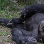 kenya_animals_monkeys_IMG_0245