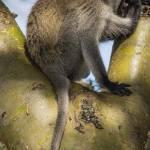 kenya_animals_monkeys_IMG_9290