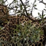 kenya_animals_simbas_IMG_0485
