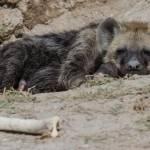 kenya_animals_simbas_IMG_1291