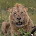 kenya_animals_simbas_IMG_9187