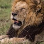 kenya_animals_simbas_IMG_9235