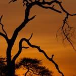 kenya_places_amboseli_IMG_1042
