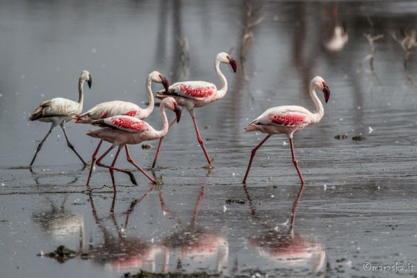 kenya-animals-birds-img-0373ED7DBAF7-C834-FF5D-DD4F-B8AE54F81998.jpg