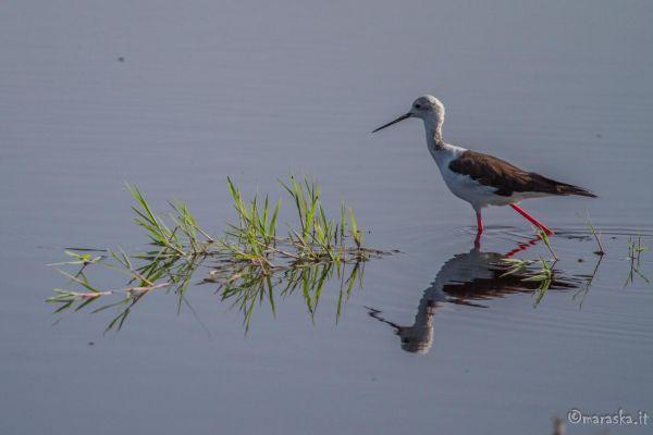 kenya-animals-birds-img-10686259B198-25D4-3E5B-72BD-607A3A1408BB.jpg