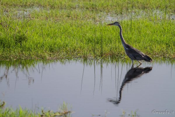 kenya-animals-birds-img-1081CC78D447-B38B-D994-D55C-FC088889C187.jpg
