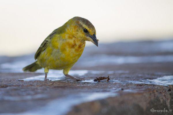 kenya-animals-birds-img-978872374788-F6D6-139F-24BA-93987FBB111A.jpg