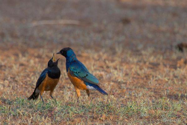 kenya-animals-birds-img-98901618E96C-B4EB-2CDF-89B8-13156B79A82D.jpg