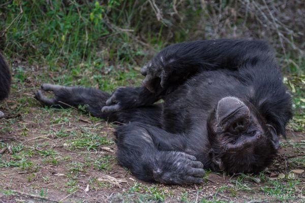 kenya-animals-monkeys-img-0245A7CA4EF0-BD70-6BFD-800F-BCE5C78AFC90.jpg