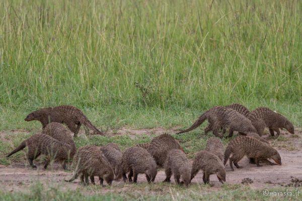 kenya-animals-others-img-039708787746-5A3E-C139-F226-34E521A1F6F2.jpg