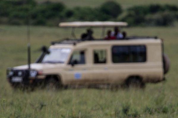 kenya-animals-simbas-img-994268D17966-D1AF-B5CF-1978-E144BF031041.jpg