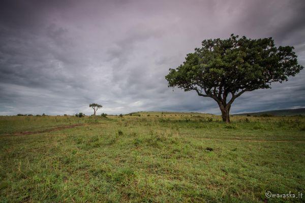 kenya-places-img-99092ECC1A39-F961-786F-D4D0-E28965D24510.jpg