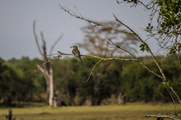 kenya-animals-birds-img-0215DD71AFA3-784C-0C84-00D0-F1486A49B757.jpg
