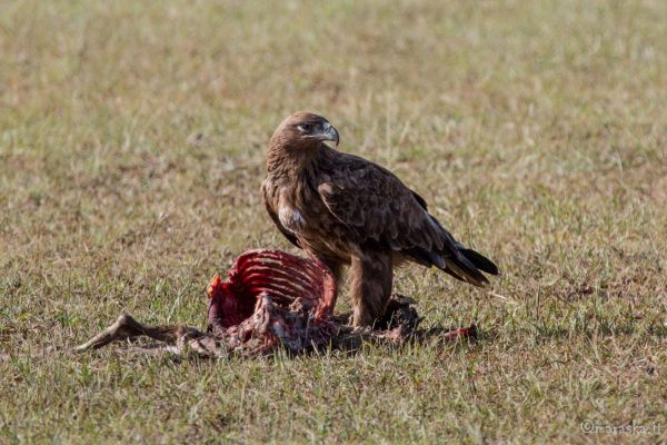 kenya-animals-birds-img-0327E36D2A35-69BB-97D1-8436-1B12A1EF70CB.jpg
