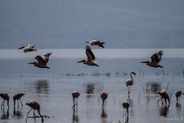 kenya-animals-birds-img-0361F039E01F-2403-964F-0447-60437A0CEA1D.jpg