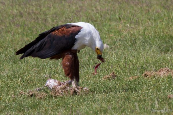 kenya-animals-birds-img-1274F208B409-CD34-D0A8-EA9F-13C9DFBBA30E.jpg