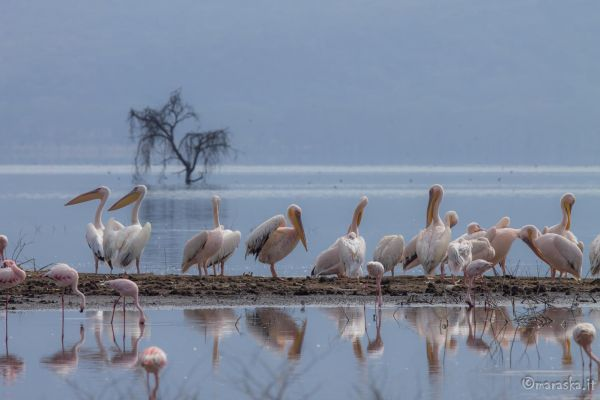 kenya-animals-birds-img-8865D8F19481-ADA8-A837-DE76-F95B0F4CDE9C.jpg