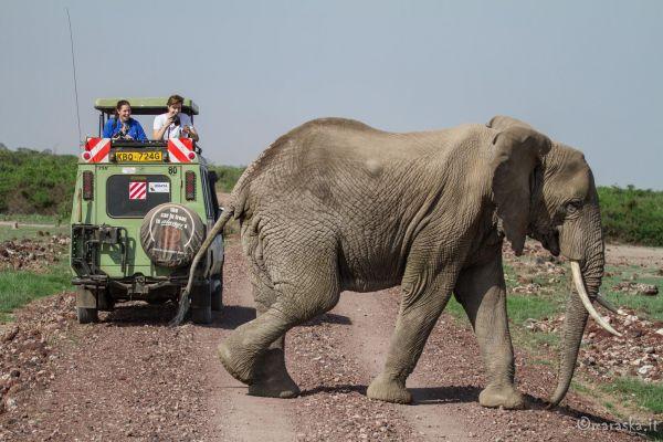 kenya-animals-elefants-img-1111222FB666-2170-1C87-027F-B2C37BE85668.jpg