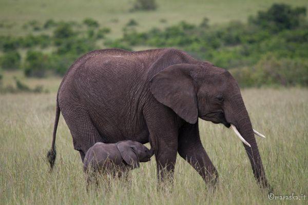 kenya-animals-elefants-img-99827A5E7D05-6D55-57A6-8725-14399604F47E.jpg