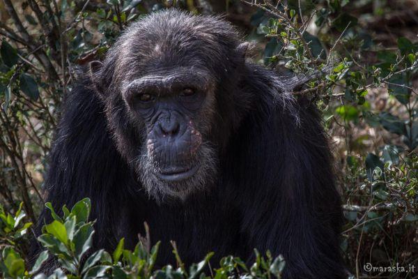kenya-animals-monkeys-img-0227FC934509-9F3E-2CC0-7524-2AF12C4FAC1B.jpg