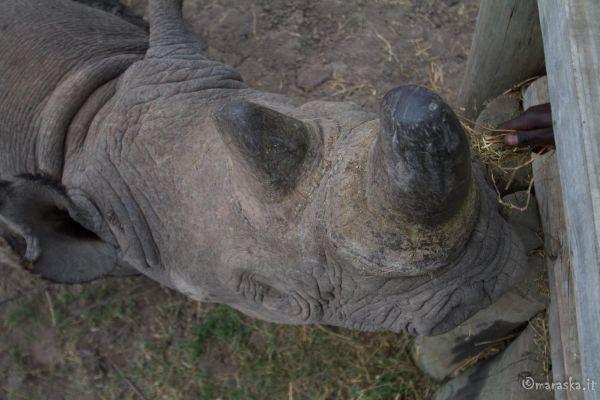 kenya-animals-ruminant-img-031760B7AFAB-4454-C325-6F27-EE758C996B82.jpg