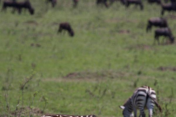 kenya-animals-ruminant-img-0508-2770A77B2-86E9-4768-5CE0-82DA863D5372.jpg