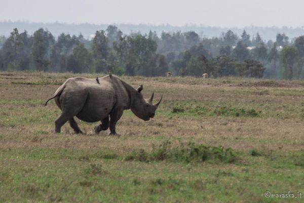 kenya-animals-ruminant-img-87608BB2A99B-34A5-8066-20EB-3EF02BF88C5D.jpg