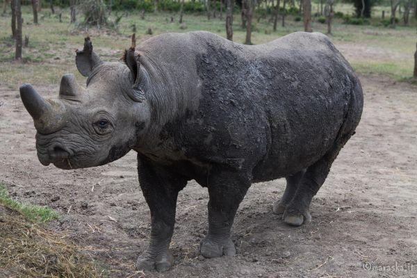 kenya-animals-ruminant-img-8815B7426FD5-F601-C0F3-B487-A337F836EE86.jpg