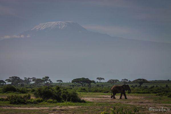 kenya-places-amboseli-img-96163F7F0F43-1F12-D088-8EBC-F5434AC59DC2.jpg