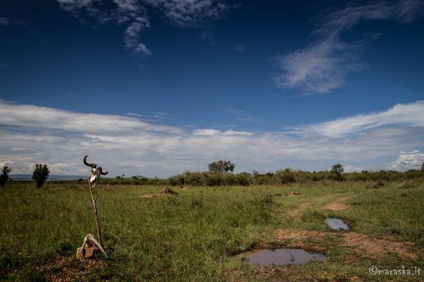 kenya-places-masaimara-img-0212-2950F174F-F291-9601-9F31-404AB0544D27.jpg