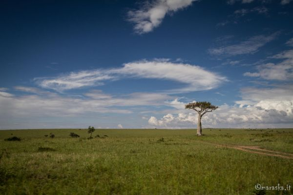 kenya-places-masaimara-img-0223-2569338A0-75D0-4522-EECE-48A3E719028B.jpg
